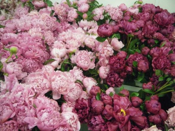pink-peonies-c