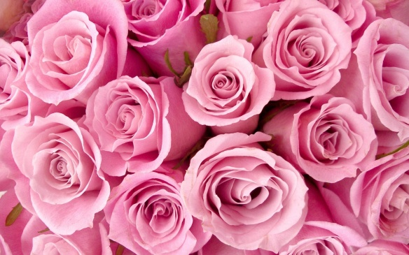 special_pink_roses-1280x800